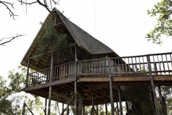 Girafee Tree House